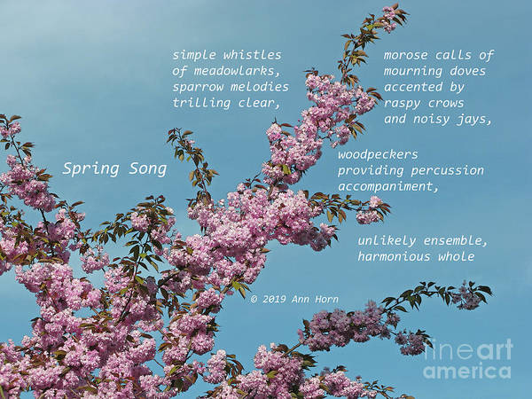 Photograph - Spring Song by Ann Horn