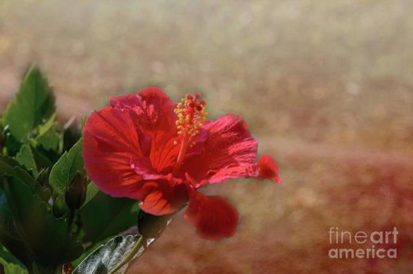 Photograph - Spring Splendor by Judy Hall-Folde