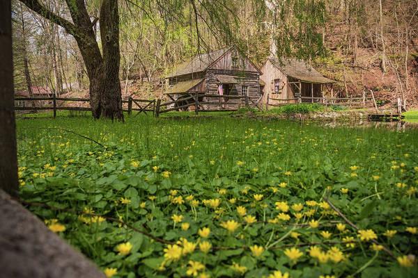 Photograph - Spring Sprung by Kristopher Schoenleber