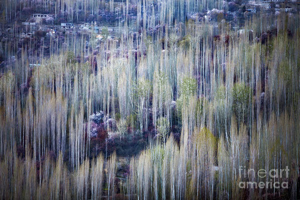 Photograph - Spring Strokes by Awais Yaqub