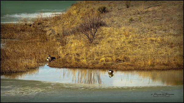 Wall Art - Photograph - Spring Thaw by Brenda D Busskohl
