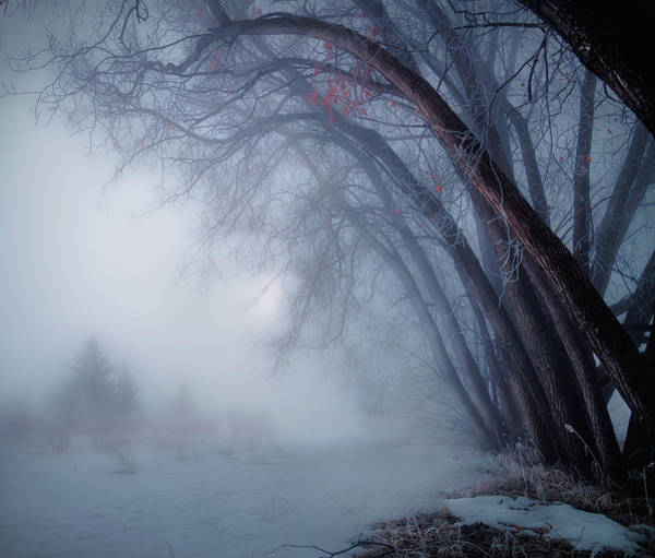 Photograph - Spring Time Foggy Morning by Dan Jurak