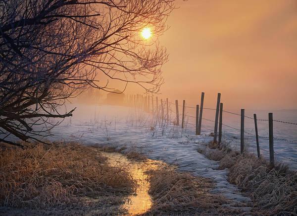 Photograph - Spring Time In Alberta by Dan Jurak