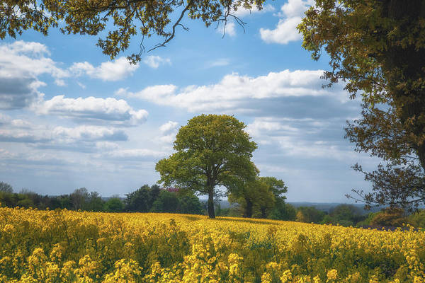 Wall Art - Photograph - Spring Tree Parade Through The Rapeseed Field by Chris Fletcher