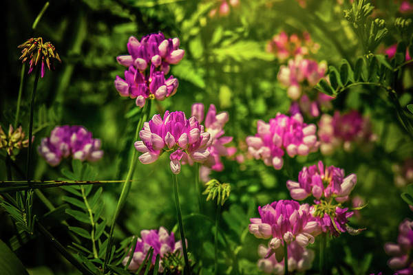 Photograph - Spring Wildflowers by Allin Sorenson