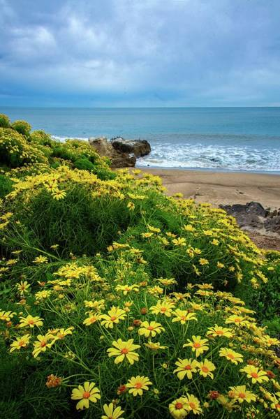 Photograph - Spring Wildflowers At Leo Carrillo State Beach by Lynn Bauer