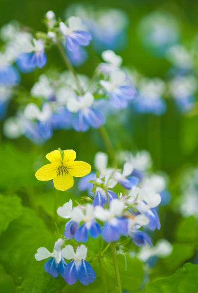 Wall Art - Photograph - Spring Wildflowers by Michael Lustbader