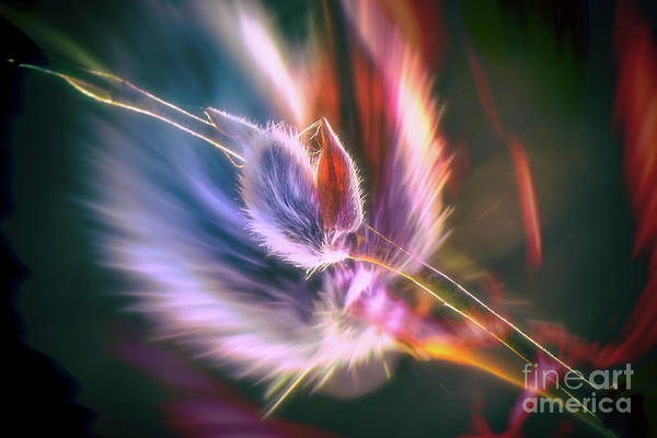Abstract Impressionism Photograph - Spring Willow 3 by Veikko Suikkanen