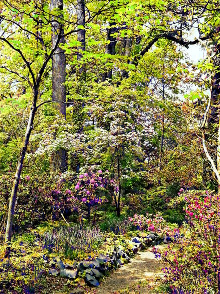 Photograph - Spring Woods by Susan Savad