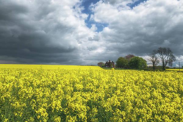 Wall Art - Photograph - Spring Yellow by Chris Fletcher
