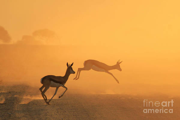 Wall Art - Photograph - Springbok - African Wildlife Background by Stacey Ann Alberts