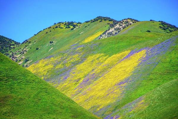 Photograph - Spring's Floral Blanket - Superbloom 2019 by Lynn Bauer