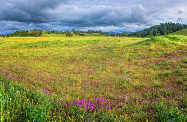 Photograph - Spring's Sunshine At Shell Creek - Superbloom 2019 by Lynn Bauer