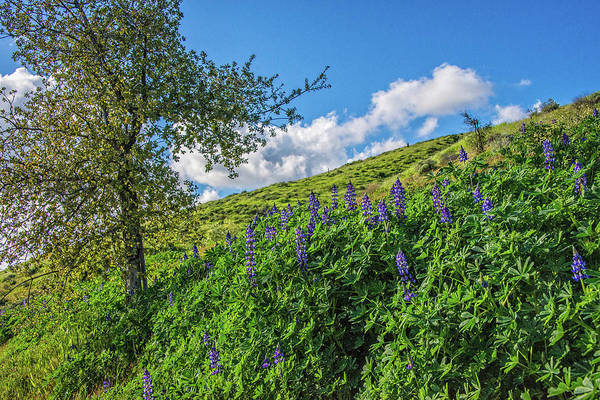 Photograph - Spring's Sweet Surprise In Simi Valley by Lynn Bauer