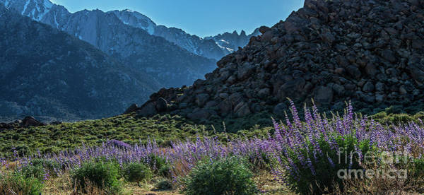 Wall Art - Photograph - Springtime At Mount Whitney by Stephen Whalen