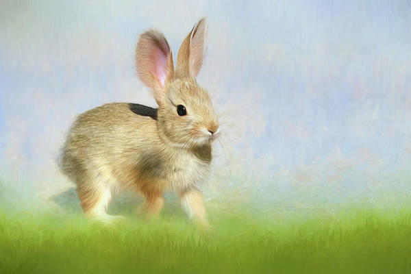 Cottontail Photograph - Springtime Baby Bunny by Donna Kennedy