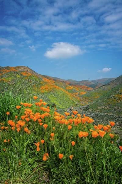 Photograph - Springtime Beauty In Walker Canyon - Superbloom 2019 by Lynn Bauer