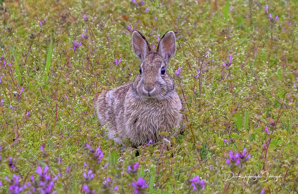 Wall Art - Photograph - Springtime Bunny by Dawn Hough Sebaugh