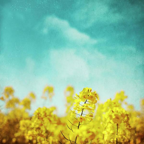 Photograph - Springtime by Dirk Wuestenhagen