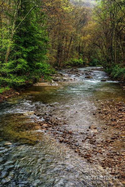 Photograph - Springtime Gauley River Headwaters by Thomas R Fletcher