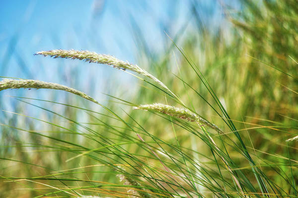 Wall Art - Photograph - Springtime Grasses by Bonnie Bruno