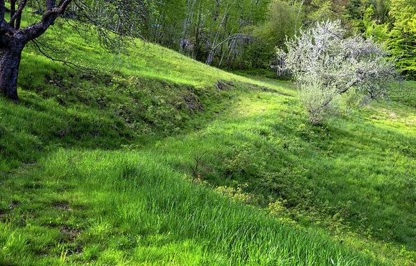Photograph - Springtime Hillside by Tom Singleton
