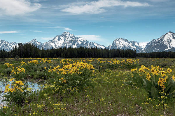 Photograph - Springtime In Tetons by Ronnie and Frances Howard