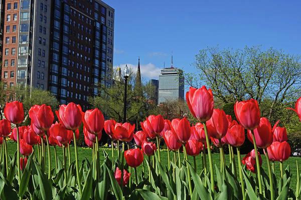 Photograph - Springtime In The Boston Public Garden Boston Ma by Toby McGuire