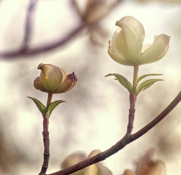 Wall Art - Digital Art - Springtime In Upstate Ny 6 by Tina Baxter