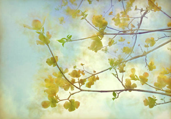 Wall Art - Digital Art - Springtime In Upstate Ny 7 by Tina Baxter