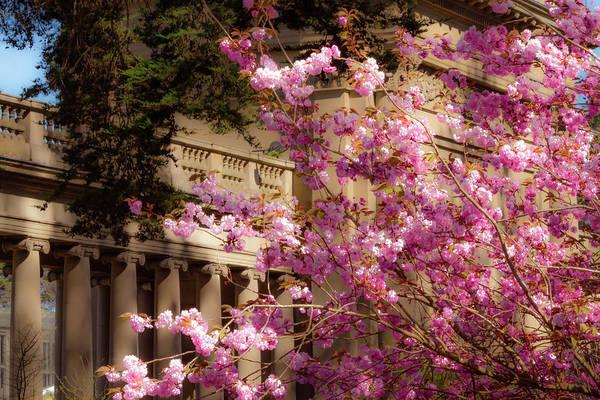 Photograph - Springtime Memories by Bonnie Follett