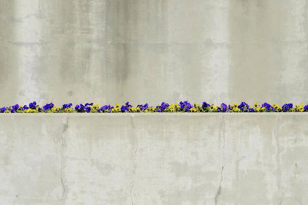 Photograph - Springtime Minimal by Stuart Allen