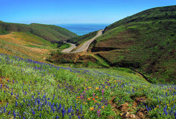 Photograph - Springtime Wonders In Malibu - Superbloom 2019 by Lynn Bauer