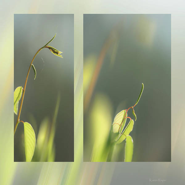 Photograph - Spring Vine by Karen Rispin