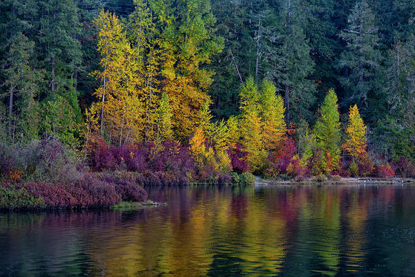 Photograph - Sproat Lake by Randy Hall