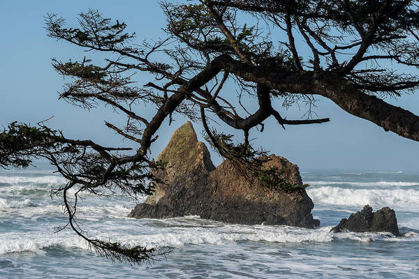 Photograph - Spruce And Seastacks by Robert Potts