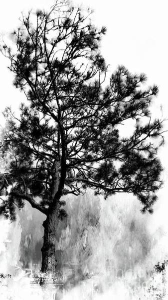 Photograph - Spruce Tree by Marcia Lee Jones