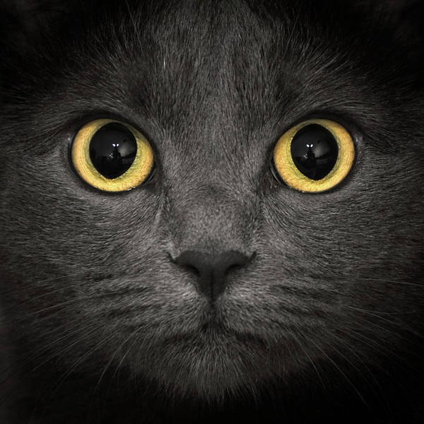 Wall Art - Photograph - Squared Hypno Cat by Daniele Carotenuto Photography
