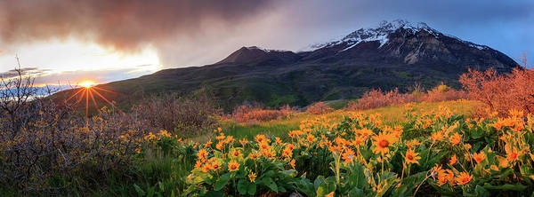 Wall Art - Photograph - Squaw Peak Wildflower Sunstar Panorama by Johnny Adolphson
