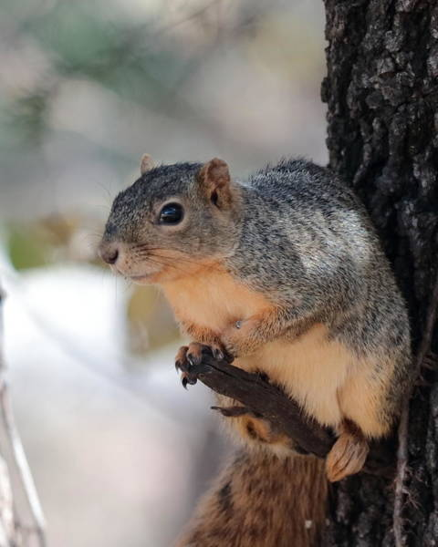 Photograph - Squirrel 3582 by John Moyer