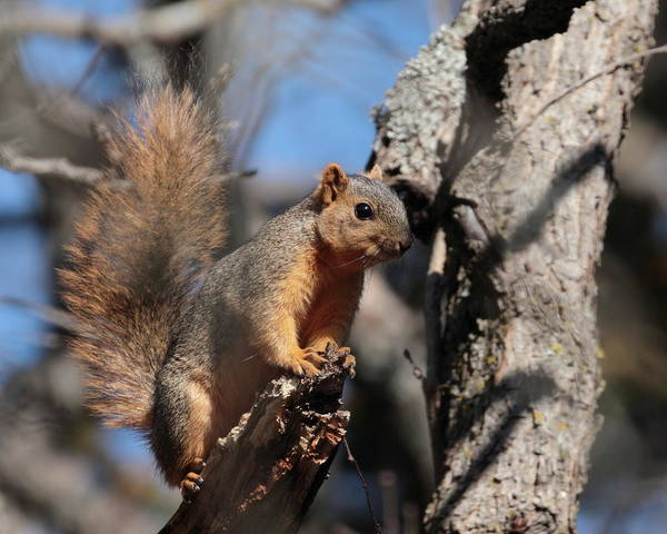 Photograph - Squirrel 6661 by John Moyer