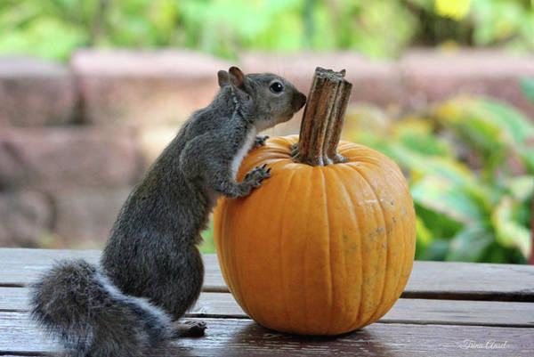 Photograph - Squirrel And Pumpkin by Trina Ansel