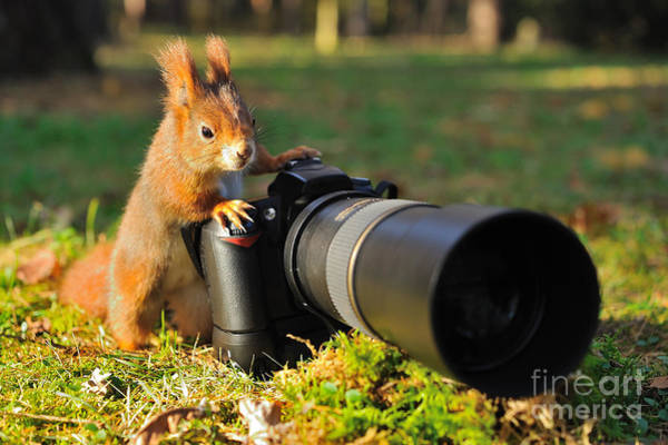 Wall Art - Photograph - Squirrel As A Photographer With Big by Stanislav Duben