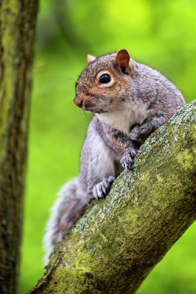Photograph - Squirrel At Greenwich Park by Pablo Lopez