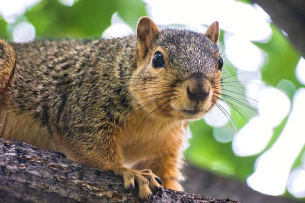 Photograph - Squirrel Close Up by Don Northup