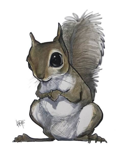 Drawing - Squirrel by John LaFree