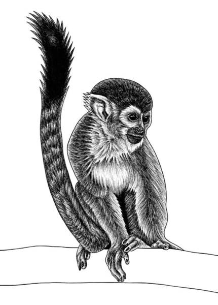 Squirrel Monkey Wall Art - Drawing - Squirrel Monkey - Ink Illustration by Loren Dowding