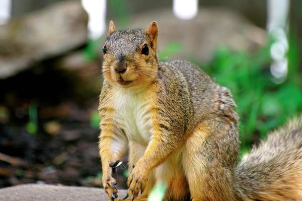 Photograph - Squirrel Time by Don Northup