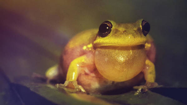 Wall Art - Photograph - Squirrel Tree Frog by Art Spectrum