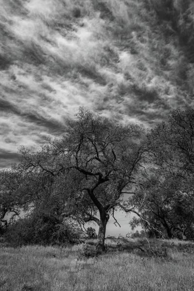 Photograph - Srper4 by TM Schultze